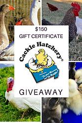 Gardening Know How: Cackle Hatchery $150 Gift Certificate Giveaway