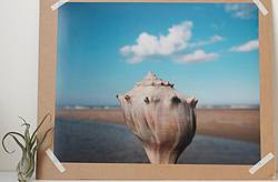 Life Like Photography: 16x20 Beach Shell Photographic Print Giveaway
