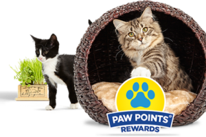 Fresh Step Paw Points January Instant Win Game